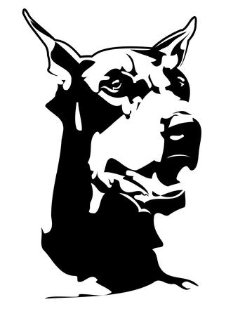 pinscher: black doberman head with white background Illustration