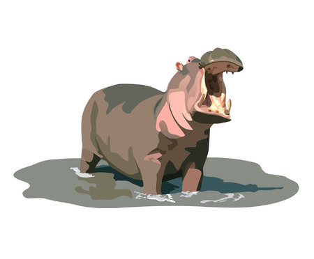 animals amphibious: Angry hippo standing in water