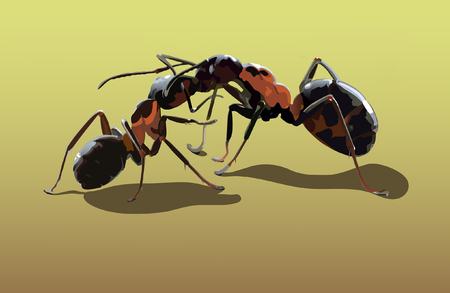 crawling creature: two ants kissing on the yellow sand