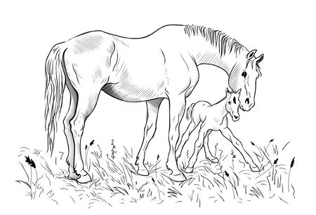 helps: A mare helps a foal to get up on feet