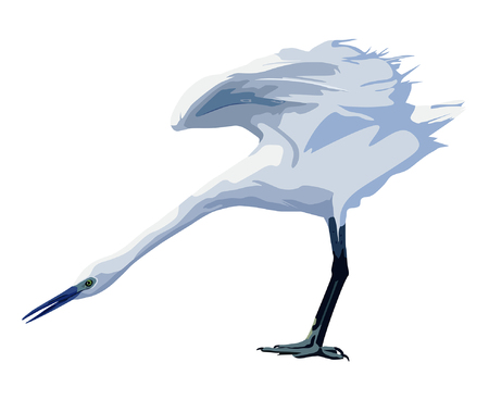 heron: small white heron spreads its wings Illustration