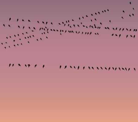 Les oiseaux peuvent penser que les connexions sans fil ne sont pas bonnes
