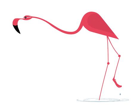 Elegant pink flamingo stands in water
