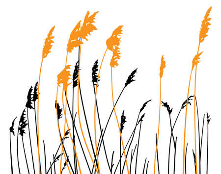 steppe: Silhouette of steppe grass on white background