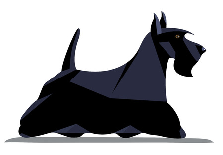 Scotch terrier minimalist image on a white background