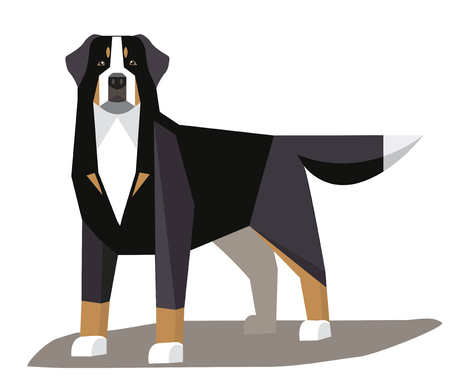 Bernese Mountain Dog minimalist image on a white background