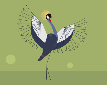 The mating display of the crowned crane on green background