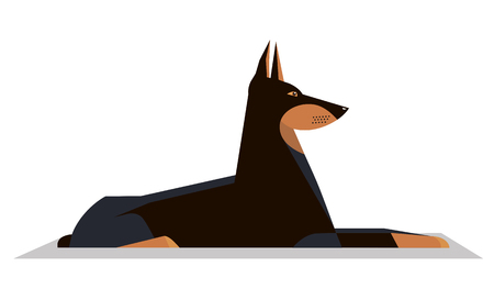 Dobermann lies on the ground on a white background, minimalistic image Illustration