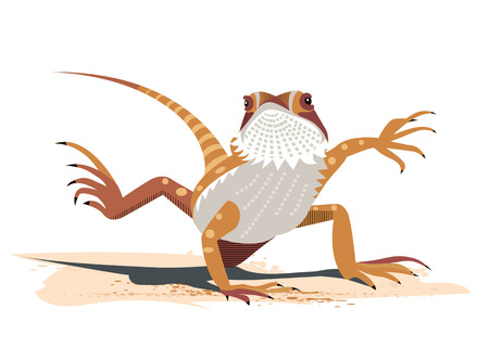 Kung Fu of the Bearded Dragon (Pogona vitticeps)