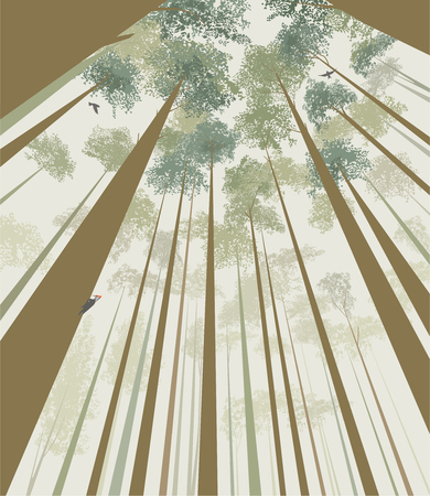 Trees pierce the sky: view from the bottom up Stock Illustratie