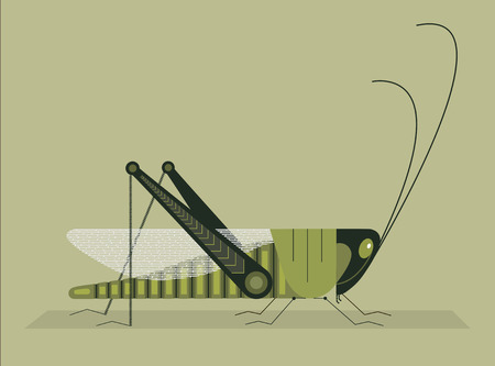 Green grasshopper with springy hind legs on a light green background Banco de Imagens - 111488730