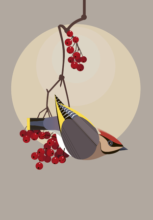 Beautiful waxwing sits on a branch of viburnum and carefully looks around Illustration