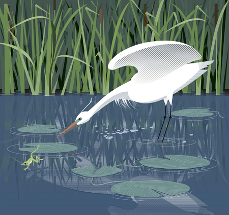 Egret hunts for a frog in the reeds, among water lilies Illustration