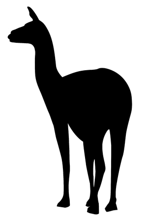 Silhouette of a graceful camel guanaco on a white background Ilustração