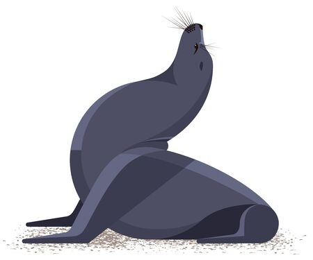 Seal on the sandy shore