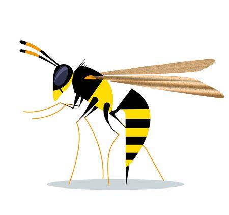 Biting wasp on white background