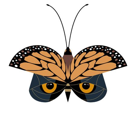 Butterfly protective coloring on wings imitates an owl Illustration