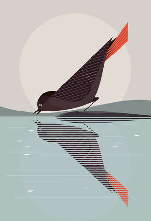 Black redstart with a bright red tail drinks water from the lake, reflected in the mirror water, stylization Illustration