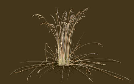 Bunch of steppe grass on green background. minimalist style