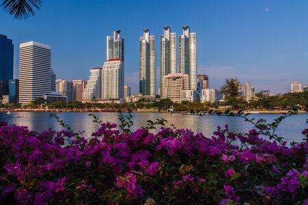 garden city: Flores en el jard�n de la ciudad de Bangkok, Tailandia pulmones