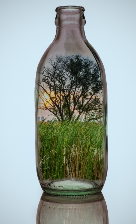 Idea, the trees, the sun in a glass bottle. photo