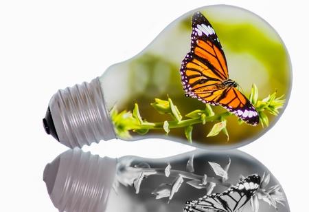 Idea, butterfly in light bulb  photo