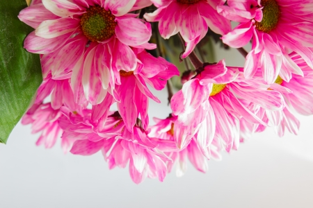 Beautiful flowers blooming light  photo