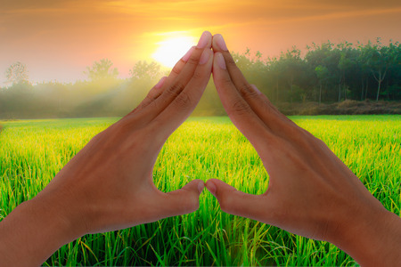 Hands making a heart shape with the nature of the field with sunlight. photo