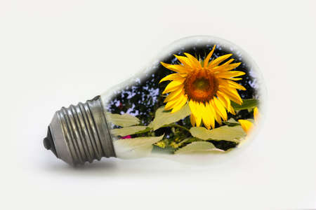 Ideas, sun flower in light bulbs new alternative  photo
