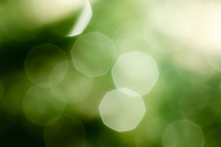 Blur soft  drops water on  green leaves Stock Photo - 28041418