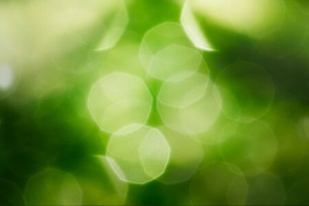 Green blur soft   on   leaves of drops water Stock Photo - 28349223