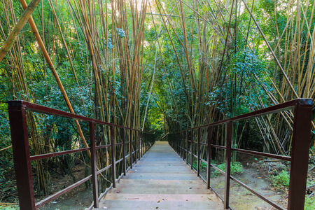 Wood walkway on a wild park to the  Waterfall Huay Mae Kamin, Thailand. photo
