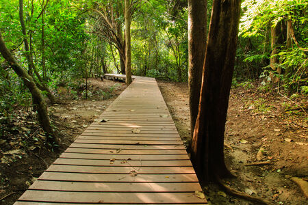 Wood walkway on a wild park to the  Waterfall Huay Mae Kamin, Thailand photo