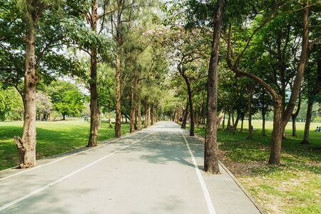 Tree with road in park in  bright good weather day,Bangkok