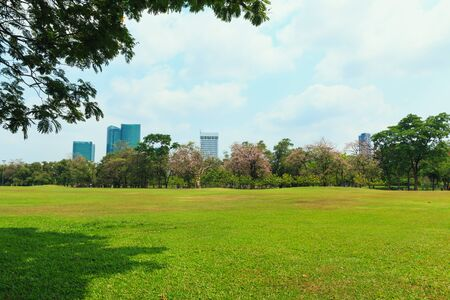 Lawn in a park with trees and sky in good weather.