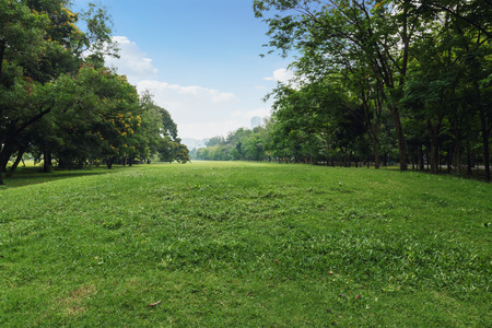 Landscape lawn  in a park with trees  in urban