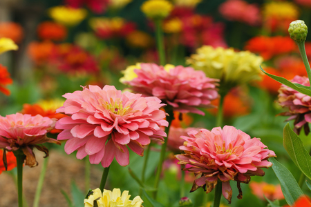 Fresh  flowers  in garden with beautiful nature Stock Photo