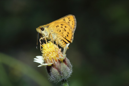 Close up common small butterfly on grass flowers Stock Photo