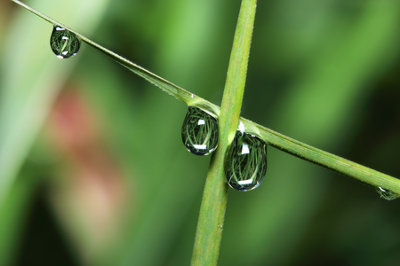 kropla deszczu: kropla deszczu na liści z bliska