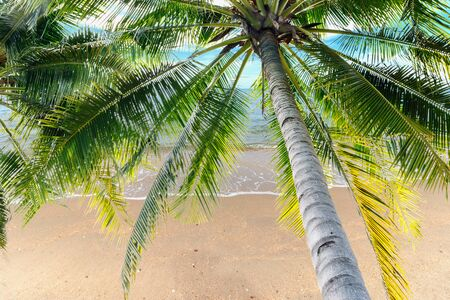 Coconut tree and tropical beach  in sea