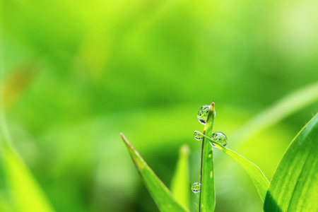 Fresh grass with dew drops close up  on nature background