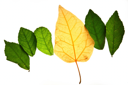 expired: Creative layout of color autumn leaves,concept  of change age skin and healthy