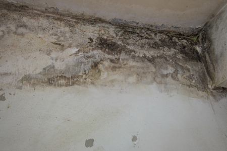 The damage from water leaks causing mold growth on the interior walls of a condominium  with not standard 版權商用圖片