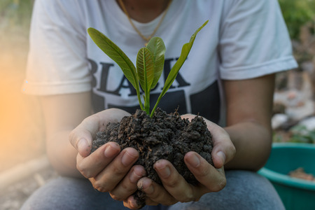 Young plant tree on soil in a hand of teen female Reklamní fotografie