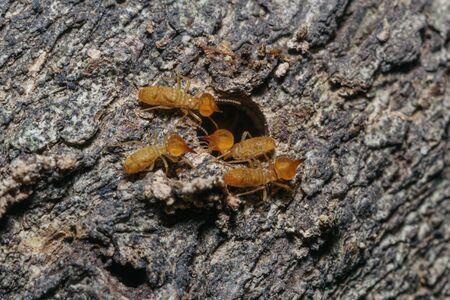 Macro photography of small termite on tree background Stock Photo