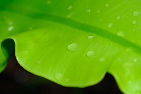 Water drops on green leaves,close up