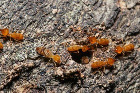 Macro photography of small termite on tree background 免版税图像
