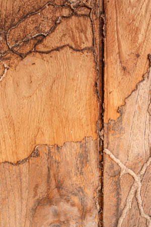 The surface of the teak with termite bite. For as background