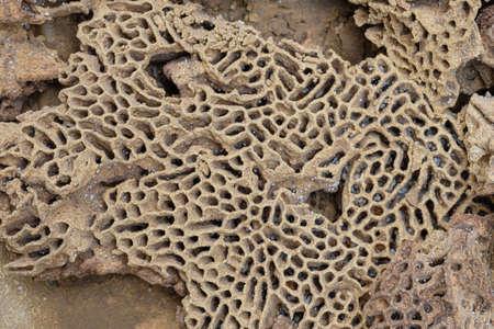 Texture holes termite nests with white larvae and termite eggs 版權商用圖片