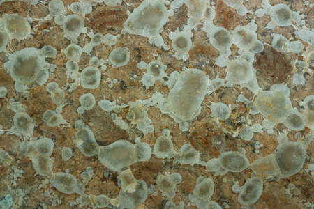 Close up,Growth of Bacteria and microorganisms from termite nest in Experiment